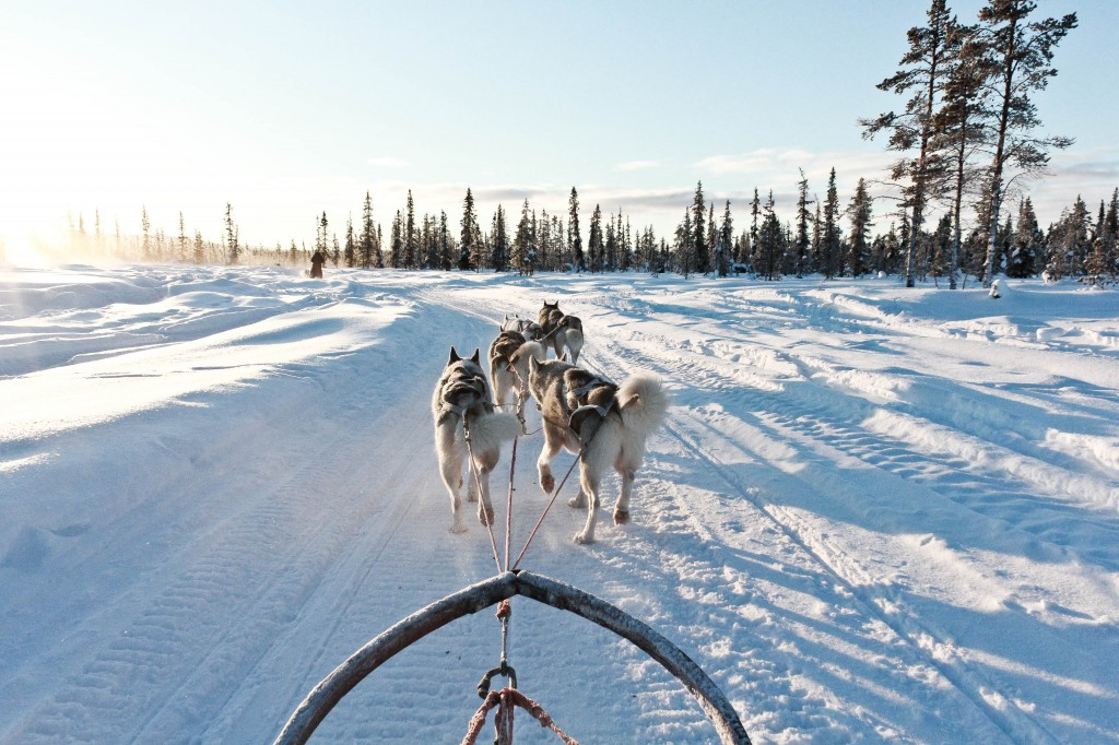 Dog sledding in Kiruna, Sweden