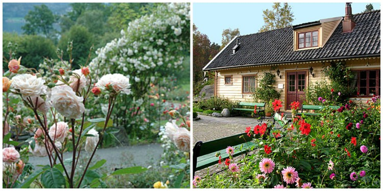 The botanical garden outside of Bergen has Norway's largest selection of roses!