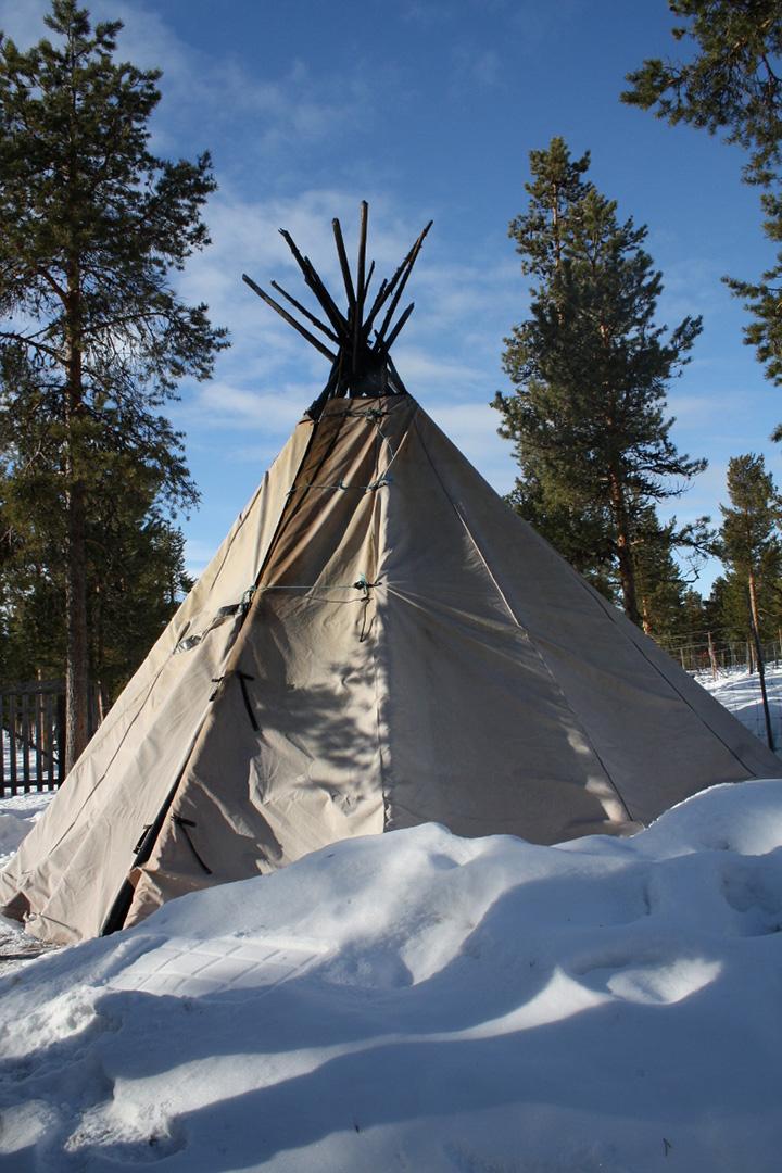 in focus lapland u0027s reindeer culture
