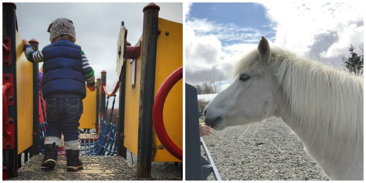 Laugardalur is home to Reykjavík's quaint zoo -- featuring Icelandic farm animals and a few seals and foxes -- and some great play structures for little ones to explore.