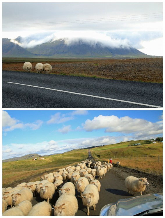 You never know when 3... or 30! sheep will pop up in the road, so keep your eyes peeled, as Carston suggests.