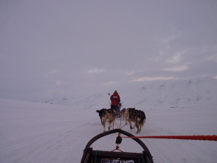 dogsledding from the musher's viewpoint