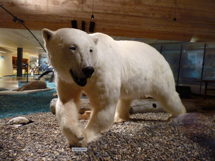 polar bear at Longyearbyen Museum, Svalbard