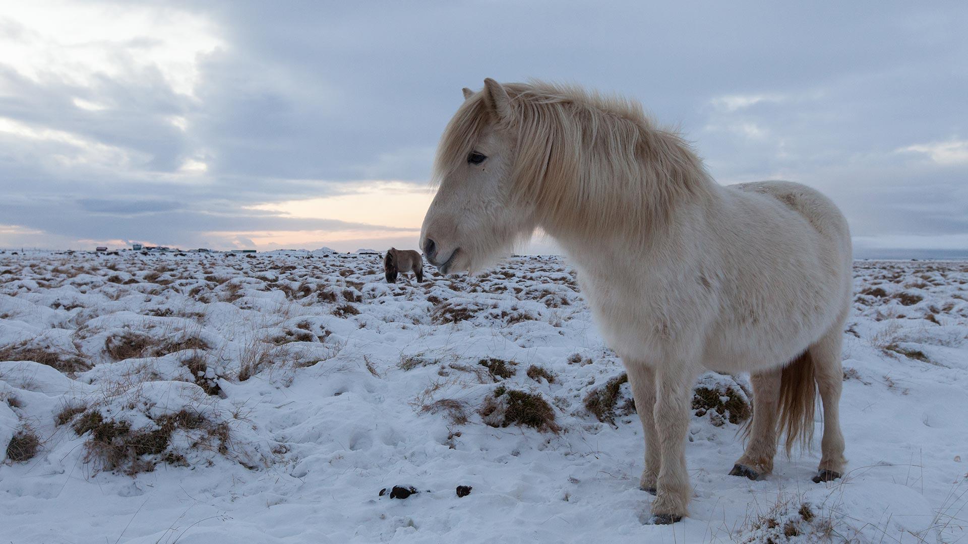 Winter Explorer around Iceland - 14 Days 13 Nights ...