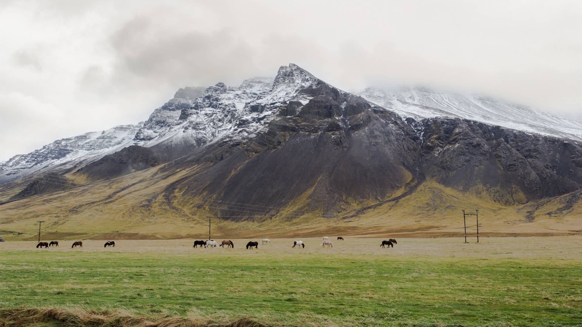 Criss Cross Food Tours Iceland