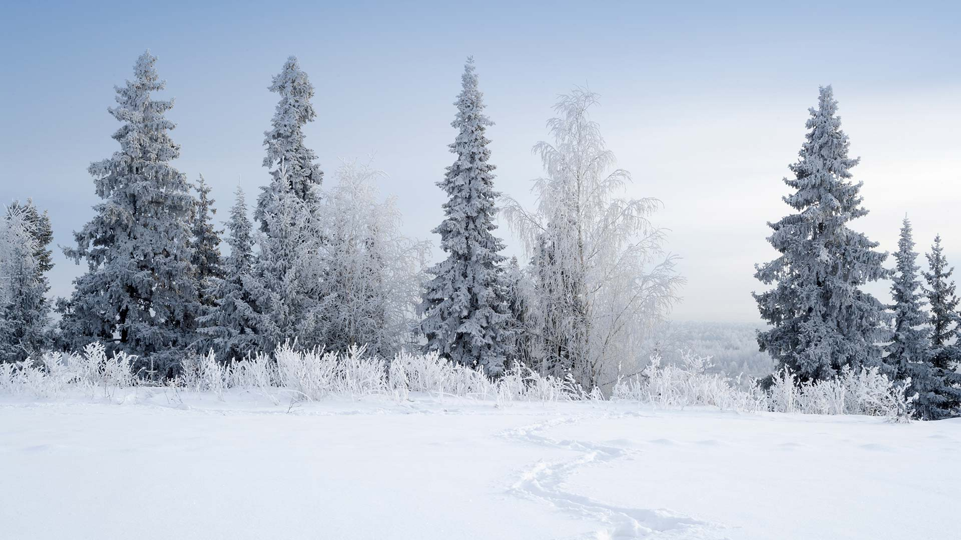 Family Winter Adventure In Lapland 4 Days 3 Nights