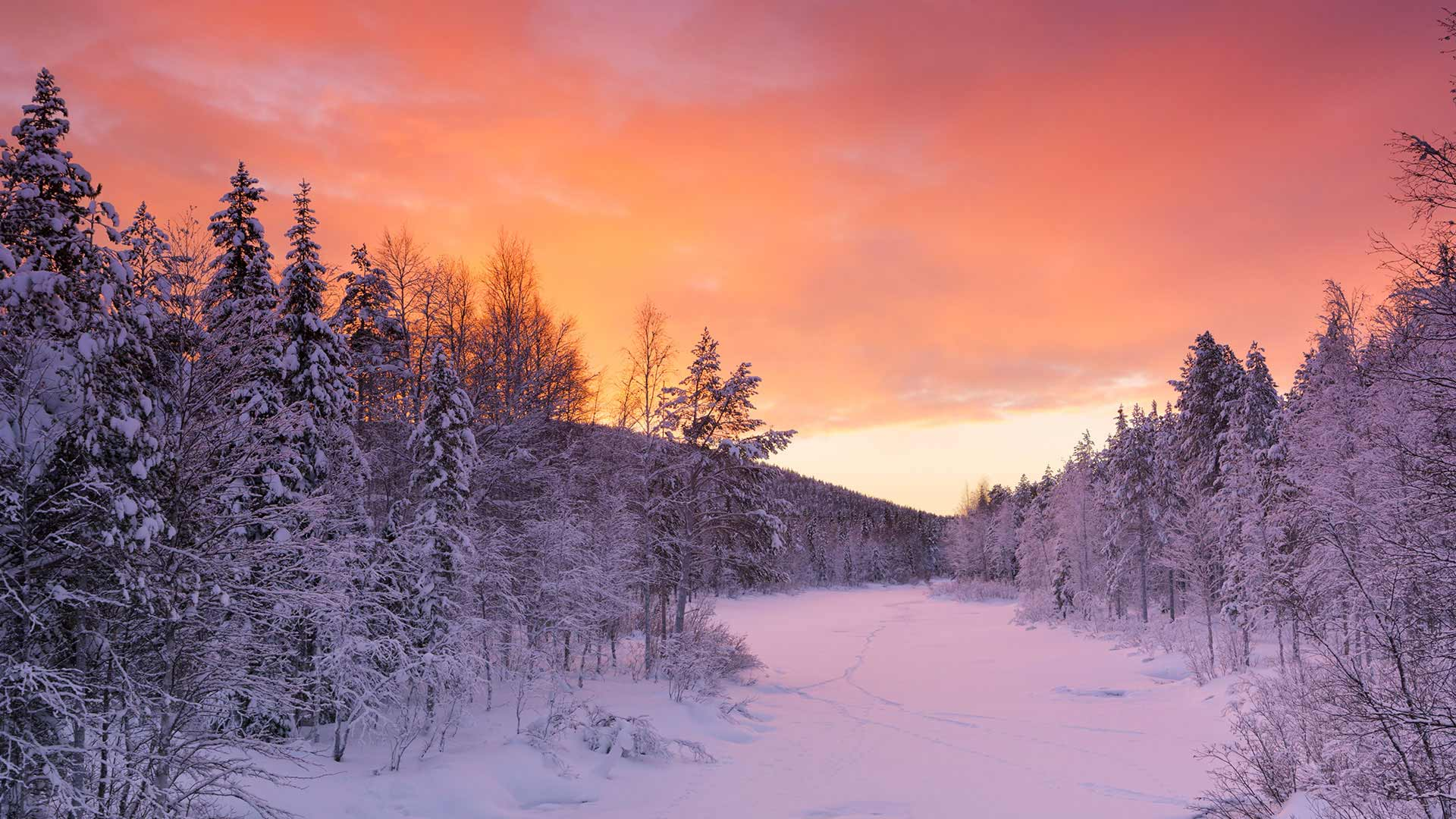 trees and sunset lapland
