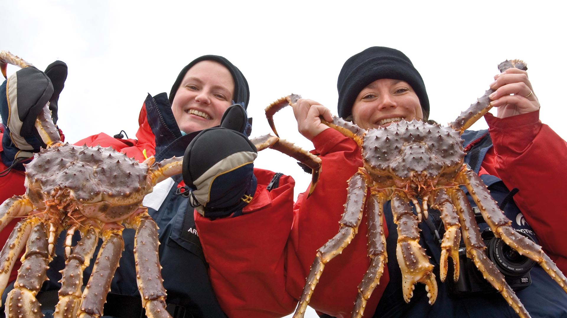 Kirkenes king crab safari